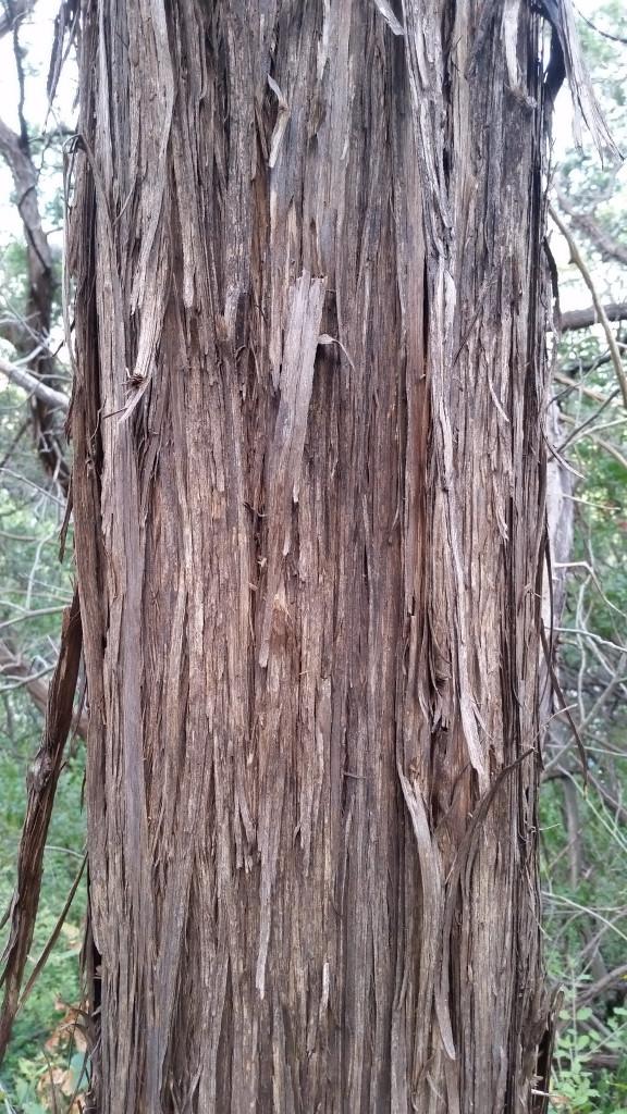 Artist Hangout - Rough Wood Texture 02