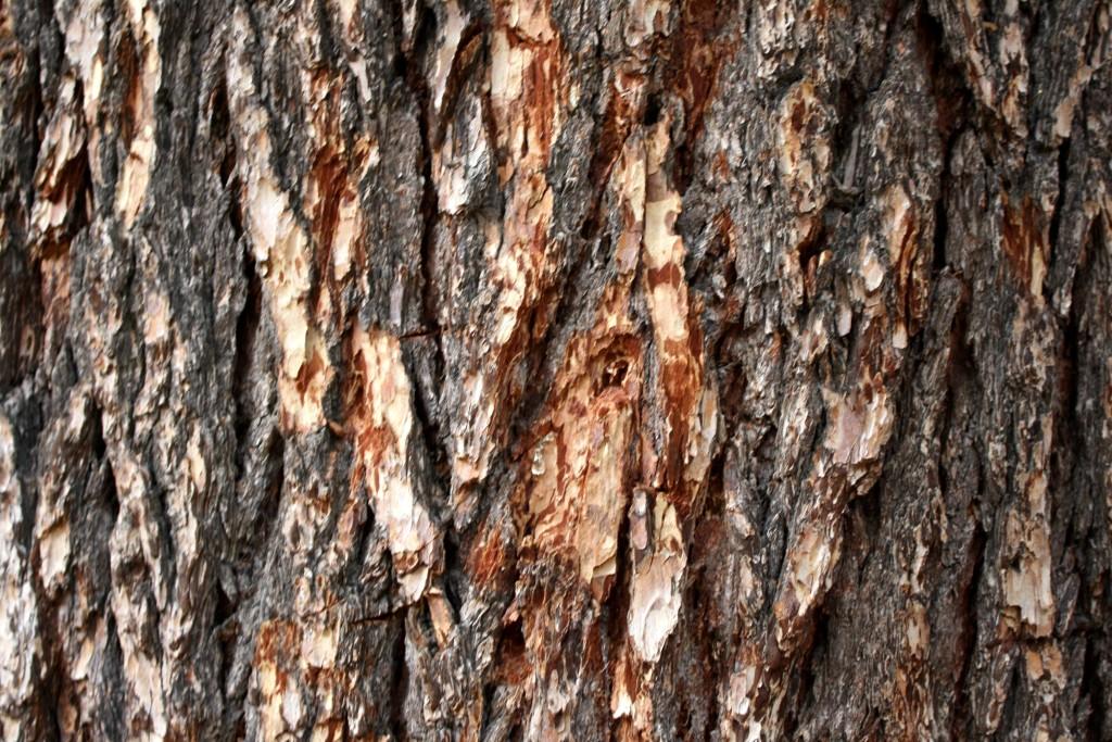 Artist Hangout - Rough Wood Texture 03 - Pine