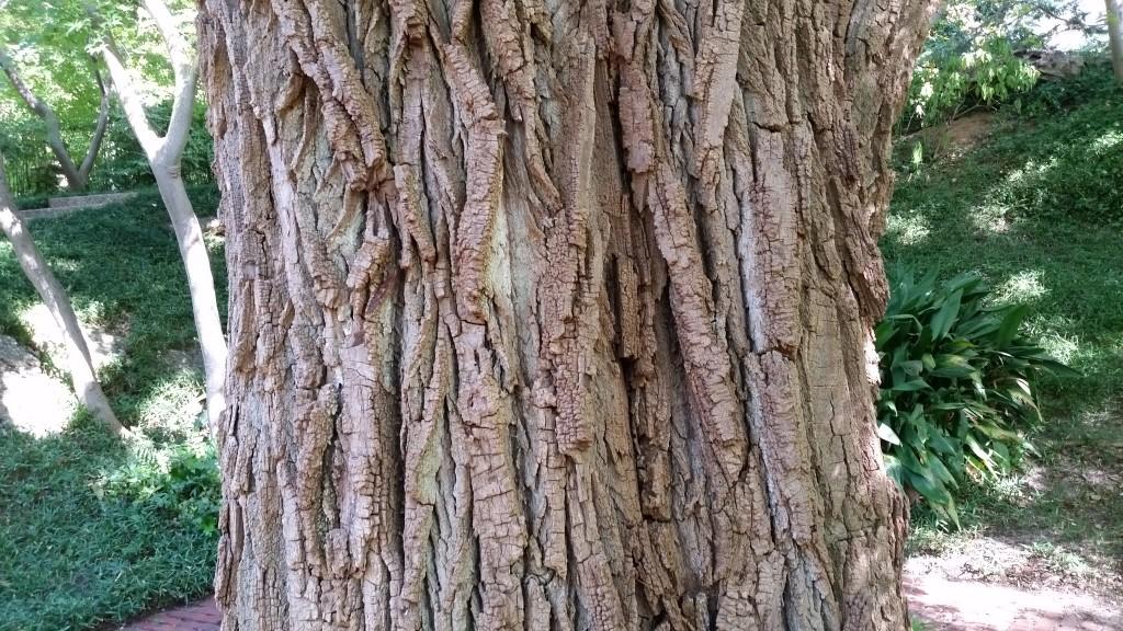 Artist Hangout - Rough Wood Texture 05